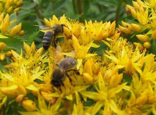 Bijen hebben bloemen nodig - Piet De Bruyn