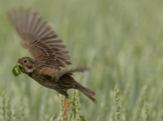Akkervogelbeheer vraagt om juiste maatregel op juiste plaats - Piet De Bruyn - Foto: copyright Freek Verdonckt