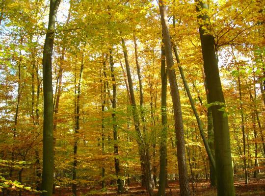 Oprichting van de Stichting Zoniënwoud goedgekeurd - Piet De Bruyn