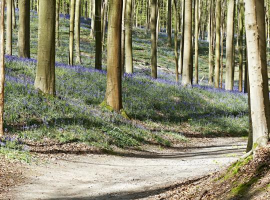 Departement Landbouw heeft het niet voor bossen - Piet De Bruyn
